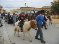 SPERONE - sfilata di cavalli - festa San Giuseppe Lavoratore - 29 aprile 2012  - Custonaci (437 clic)