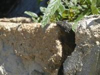 geco  - 9 maggio 2012  - Borgetto (751 clic)
