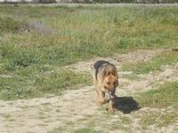 cane lupo - La Torre di Nubia - 25 aprile 2012  - Nubia (696 clic)