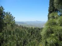 pineta e panorama dell'entroterra dal Santuario della Madonna del Romitello - 9 maggio 2012  - Borgetto (906 clic)