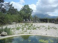 BIOPARCO di Sicilia - 17 luglio 2012  - Villagrazia di carini (334 clic)