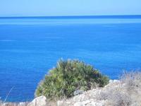 Golfo del Cofano  - palma nana sul mare - 30 agosto 2012  - Macari (452 clic)
