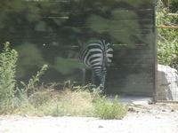 BIOPARCO di Sicilia - Zoo - 17 luglio 2012  - Villagrazia di carini (337 clic)