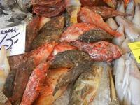 pescheria - pesci vari - 16 luglio 2012  - Trapani (594 clic)