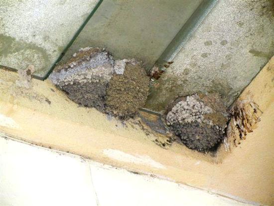 nidi di rondine - CALATAFIMI SEGESTA - inserita il 18-Apr-14