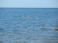 subacqueo - 25 aprile 2012  - Nubia (1466 clic)