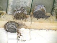 nidi di rondine presso la stazione ferroviaria Alcamo Diramazione - 4 marzo 2012  - Calatafimi segesta (585 clic)