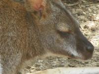 BIOPARCO di Sicilia - Zoo - 17 luglio 2012  - Villagrazia di carini (334 clic)