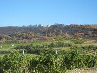vigneto e terre bruciate - 15 agosto 2012  - Alcamo (220 clic)