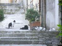 vicolo, scale e . . . raduno di gatti - 3 giugno 2012  - Erice (471 clic)
