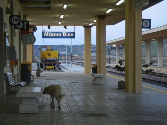 stazione ferroviaria Alcamo Diramazione - CALATAFIMI SEGESTA - inserita il 18-Apr-14