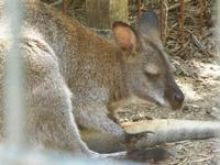 BIOPARCO di Sicilia - Zoo - 17 luglio 2012  - Villagrazia di carini (403 clic)