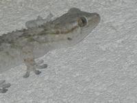 geco - 19 maggio 2012  - Alcamo (307 clic)