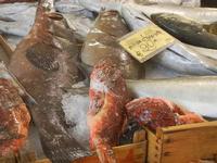 pescheria - pesci vari - 16 luglio 2012  - Trapani (666 clic)