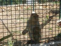 BIOPARCO di Sicilia - primati - 17 luglio 2012  - Villagrazia di carini (321 clic)
