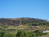 vigneto e terre bruciate - 15 agosto 2012  - Alcamo (237 clic)