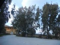 torre idrica seminascosta dagli alberi - stazione ferroviaria Alcamo Diramazione - 4 marzo 2012  - Calatafimi segesta (518 clic)