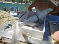 squaletto in vendita - 27 agosto 2012  - Castellammare del golfo (424 clic)
