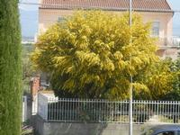 albero in fiore - 6 aprile 2012  - Alcamo (337 clic)