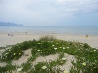 fiori, spiaggia e mare Zona Battigia - 29 aprile 2012  - Alcamo marina (451 clic)