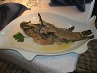 paonessa (turdo) all'acqua pazza - La Cambusa - 11 marzo 2012  - Castellammare del golfo (632 clic)