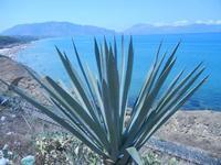 agave, Spiaggia di Ponente e Golfo di Castellammare - 26 agosto 2012  - Balestrate (394 clic)