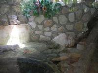 BIOPARCO di Sicilia - rettilario - 17 luglio 2012  - Villagrazia di carini (787 clic)