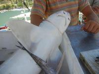 squaletto in vendita - 27 agosto 2012  - Castellammare del golfo (449 clic)