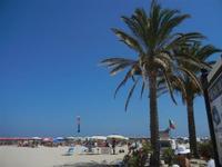 palme sulla spiaggia - 18 agosto 2012  - San vito lo capo (235 clic)