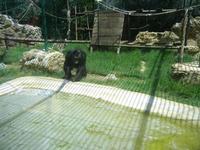 BIOPARCO di Sicilia - primati - 17 luglio 2012  - Villagrazia di carini (1381 clic)