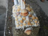 conchiglie - 10 settembre 2012  - Alcamo (212 clic)