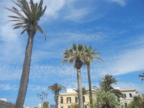palme in Piazza Vittorio Emanuele - TRAPANI - inserita il 05-Mar-15