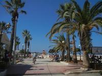 giardino pubblico - viale con palme - 18 agosto 2012  - San vito lo capo (228 clic)