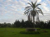 giardino con palma - 15 gennaio 2012  - Marausa (1861 clic)