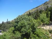 Santuario Madonna del Romitello - pineta - 9 maggio 2012  - Borgetto (1032 clic)