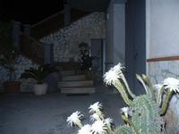 fiori di cactus - 30 luglio 2012  - Alcamo (216 clic)