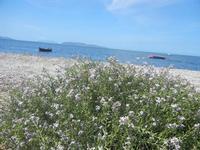 Isole Egadi - 25 aprile 2012  - Nubia (541 clic)