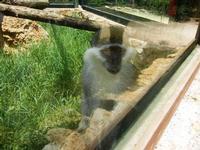 BIOPARCO di Sicilia - primati - 17 luglio 2012  - Villagrazia di carini (1552 clic)
