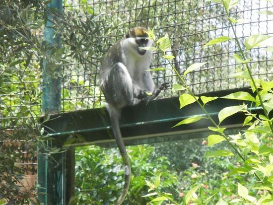 BIOPARCO di Sicilia - primati - VILLAGRAZIA DI CARINI - inserita il 20-Apr-15