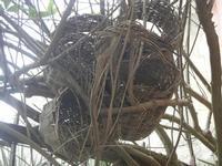 nidi artificiali fatti con vecchie fascedde per la ricotta - 15 gennaio 2012  - Marausa (700 clic)