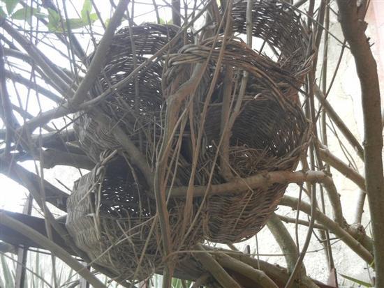 nidi artificiali - MARAUSA - inserita il 19-Mar-14
