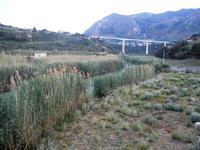 Fiume San Bartolo - 18 maggio 2012  - Castellammare del golfo (373 clic)