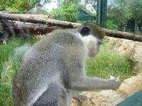 BIOPARCO di Sicilia - primati - 17 luglio 2012  - Villagrazia di carini (1162 clic)