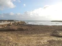 spiaggia invasa dalle alghe 8 gennaio 2012  - Marinella di selinunte (452 clic)