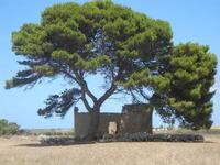 gregge all'ombra di un albero - 16 luglio 2012  - Nubia (298 clic)