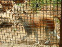 BIOPARCO di Sicilia - primati - 17 luglio 2012  - Villagrazia di carini (1366 clic)
