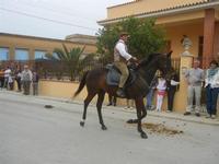 SPERONE - sfilata di cavalli - festa San Giuseppe Lavoratore - 29 aprile 2012  - Custonaci (505 clic)