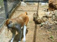 BIOPARCO di Sicilia - primati - 17 luglio 2012  - Villagrazia di carini (1301 clic)