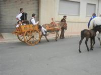 SPERONE - sfilata di cavalli - festa San Giuseppe Lavoratore - 29 aprile 2012  - Custonaci (812 clic)