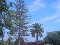 Villa Comunale Ignazio Scaturro - 6 settembre 2012  - Sciacca (328 clic)